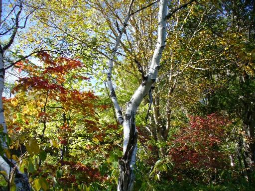 0610木戸池の紅葉