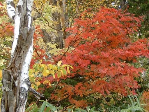 0610木戸池の紅葉2