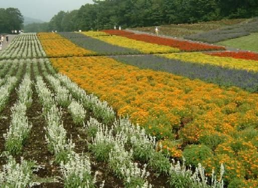0607花畑