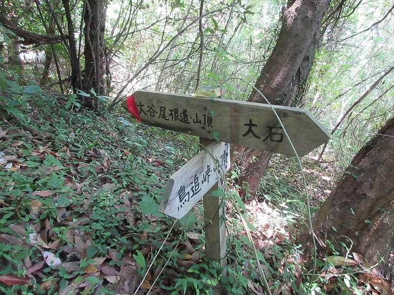 IMG4226JPG大石に下らなく林道を