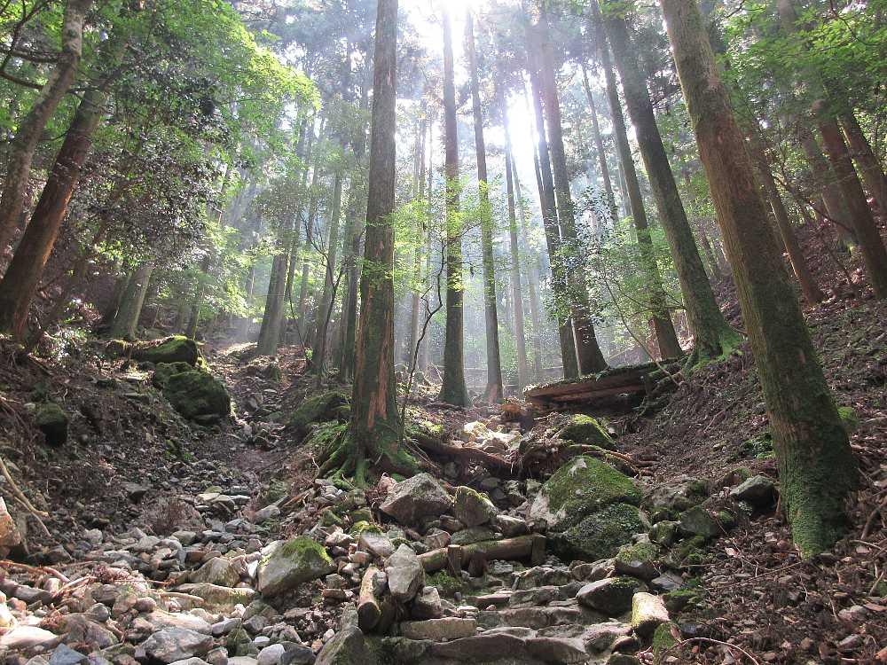 IMG4502JPG林に陽が差す