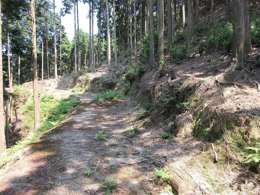 IMG4561JPG林道に出た