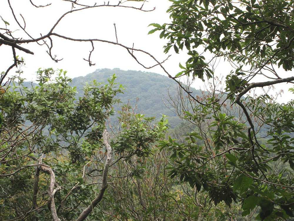 IMG4704JPG樹間に竜王山