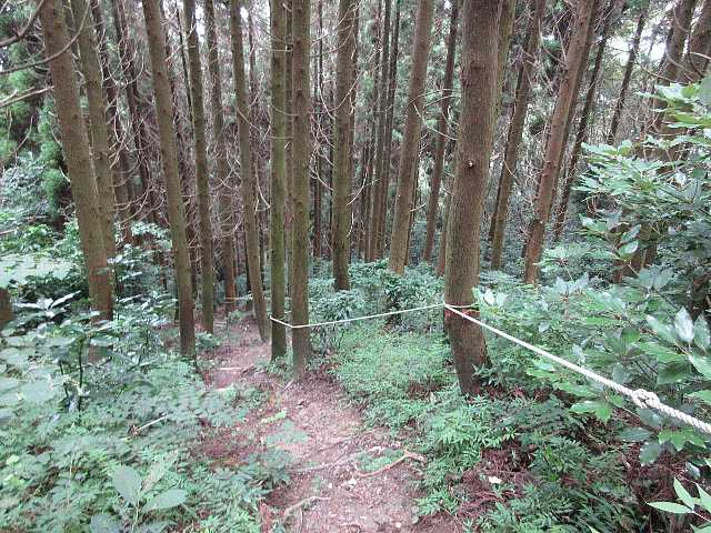 IMG4820JPG急坂が続く白糸の滝コース