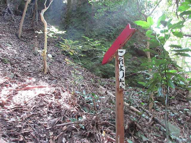 IMG4918JPG夫婦杉下の東尾根取り付き