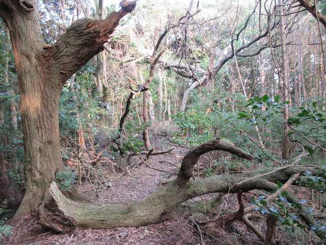IMG4992JPG倒木地帯