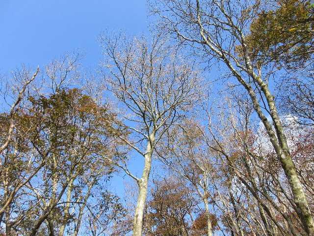 IMG6004JPG落葉し冬山モードの林