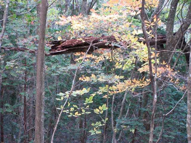 IMG6013JPG林の紅葉