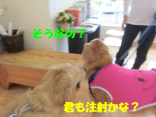 IMG_2724.jpg