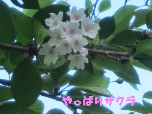IMG_2740.jpg