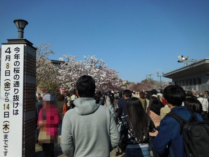 160411造幣局桜 (1)