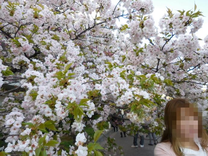 160411造幣局桜 (10)