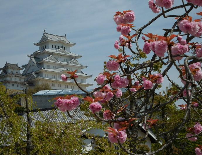 160416城と花 (2)