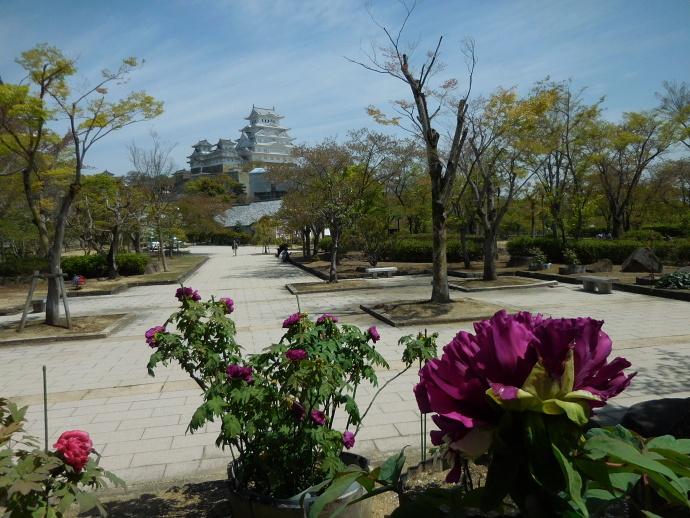 160416城と花 (4)
