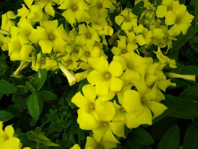 160422黄色 (4)