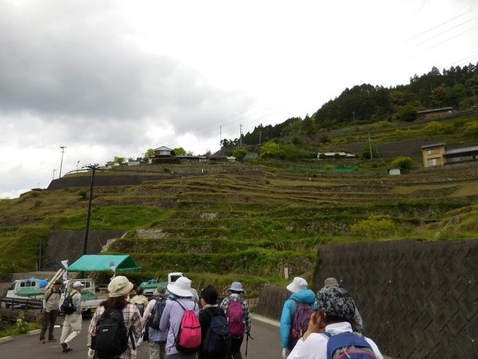 160503熊野千枚田 (2)