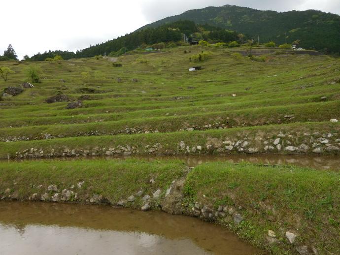 160503熊野千枚田 (9)