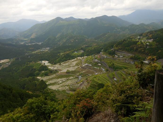 160503熊野千枚田 (10)