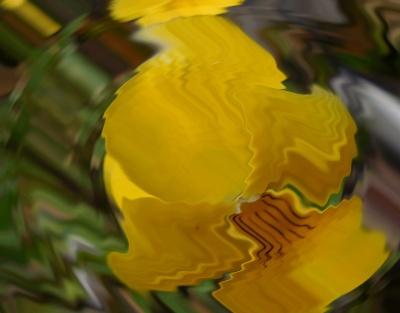 160503黄色