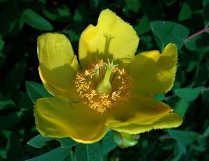 160527黄色 (3-1)