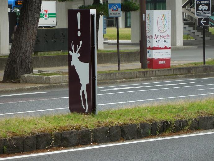 160528鹿 (1)