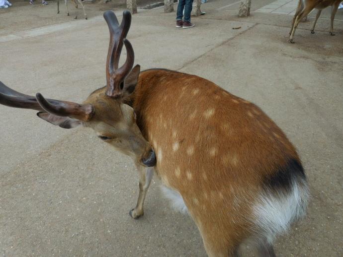 160528鹿 (3)