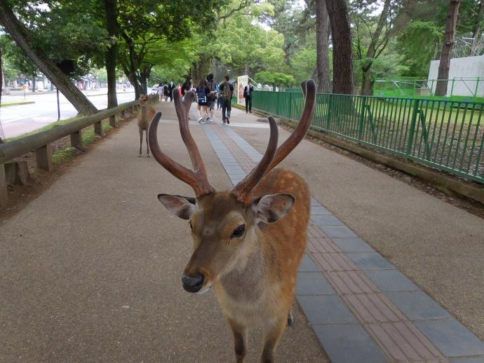 160528鹿 (6)