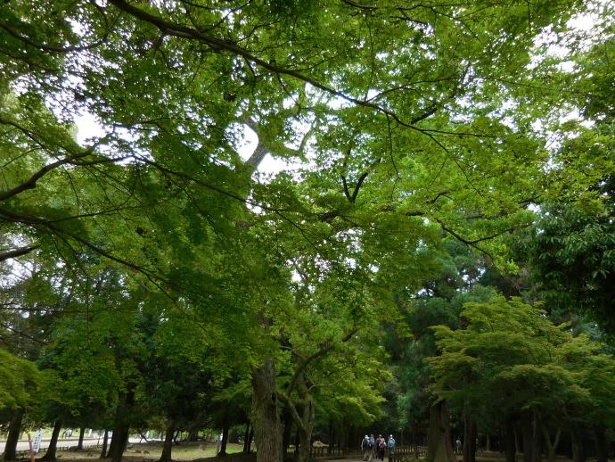 160528新緑 (4)