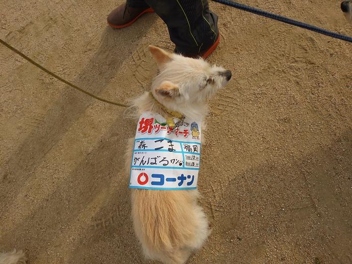 160603ツーデー完歩 (2)