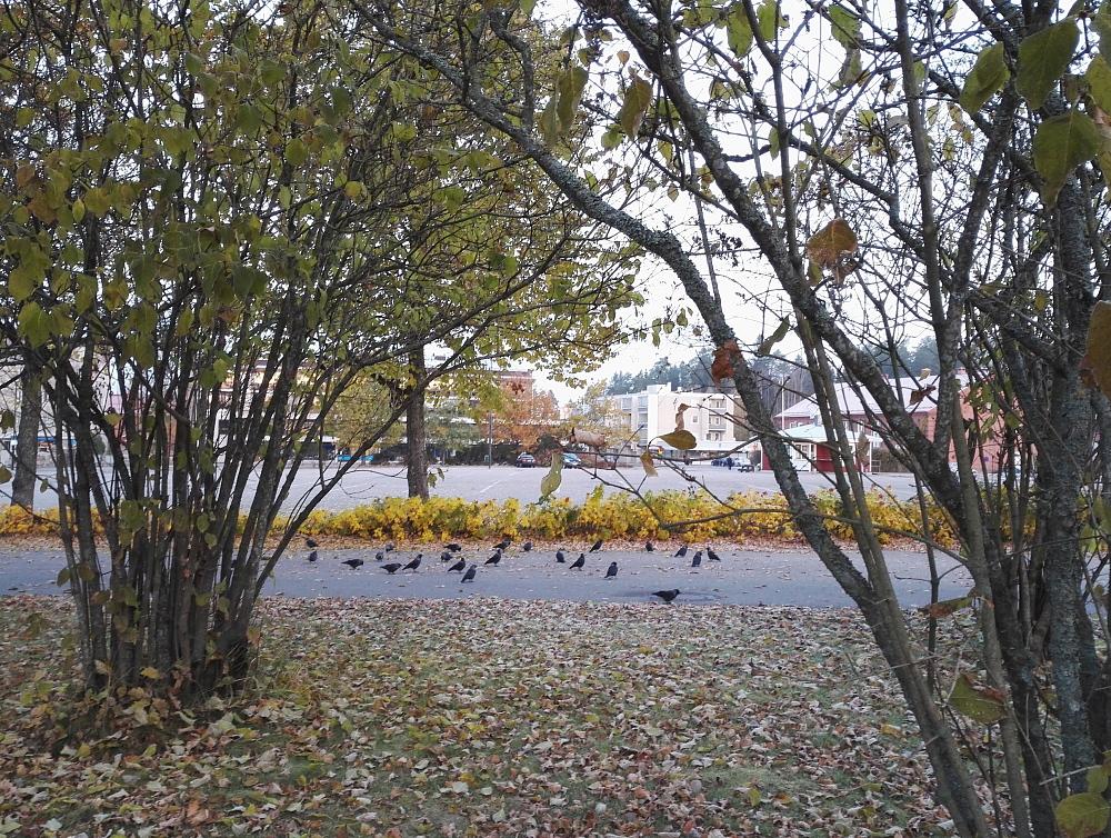 フィンランド 秋 風景 鳥