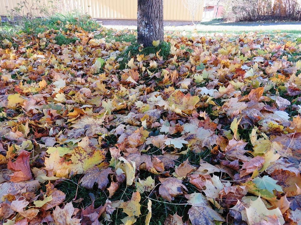 フィンランド 秋 落ち葉 Autumn