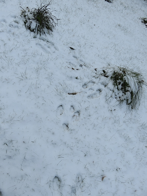 フィンランド 秋 うさぎ 足跡 雪