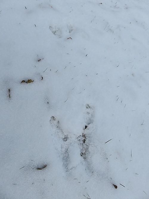 フィンランド 雪 リス 足跡