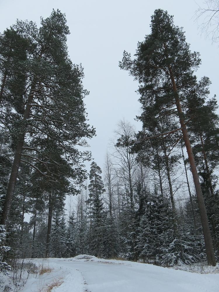 フィンランド 11月 雪景色