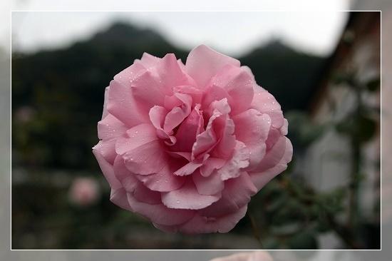 s-161108羽衣IMG_8041