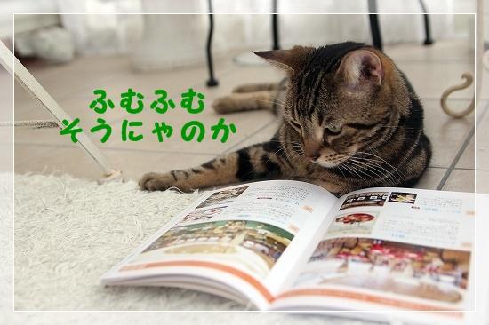s-160821IMG_6704-1.jpg