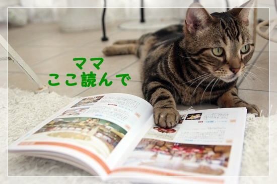 s-160821IMG_6705-1.jpg