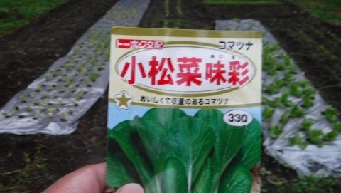 2016.10.25菜園8