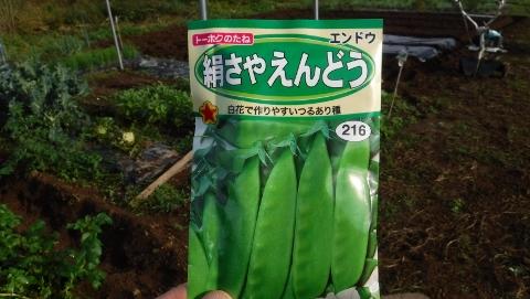 2016.10.30菜園7