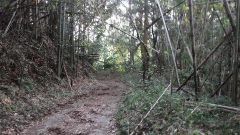 2016.11.5開墾地7