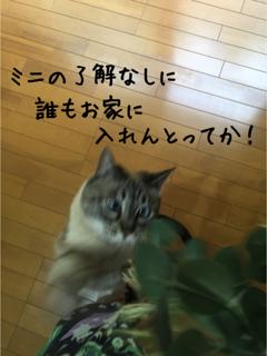 ミニの憂鬱5