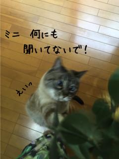 ミニの憂鬱3