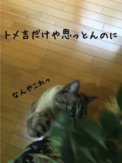 ミニの憂鬱4