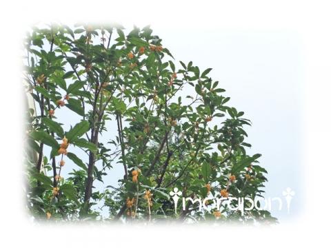 161001 金木犀-1