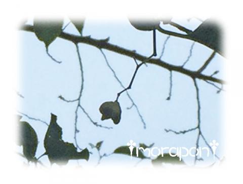 161001 金木犀-3