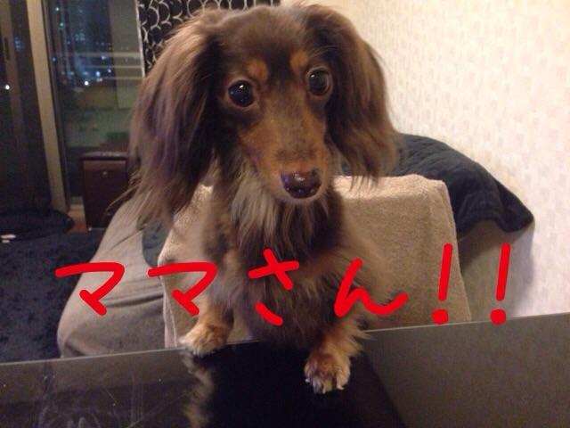 20160619153159032.jpg