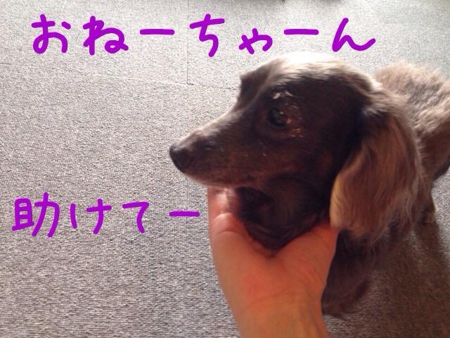 201606261310159ab.jpg