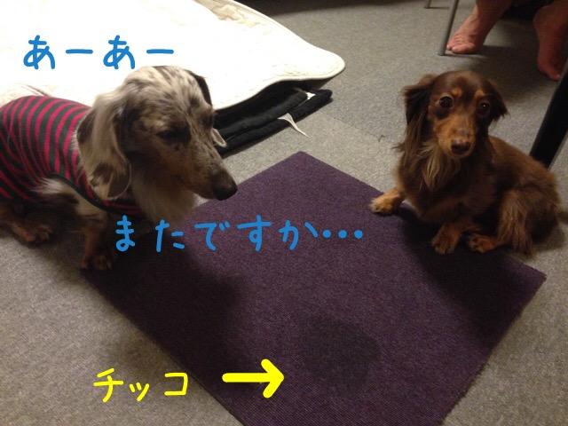 20161008181120ec3.jpg