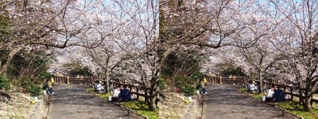 須磨浦公園 西エリア⑥(交差法)