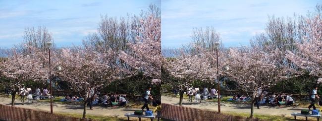 須磨浦公園 西エリア④(平行法)